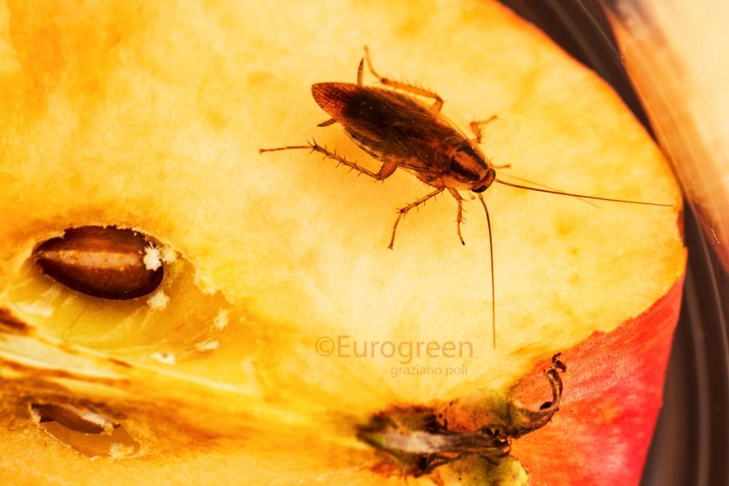 Disinfestazioni: eliminare gli insetti, topi, scarafaggi in ...