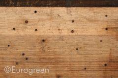 Insetti nel legno