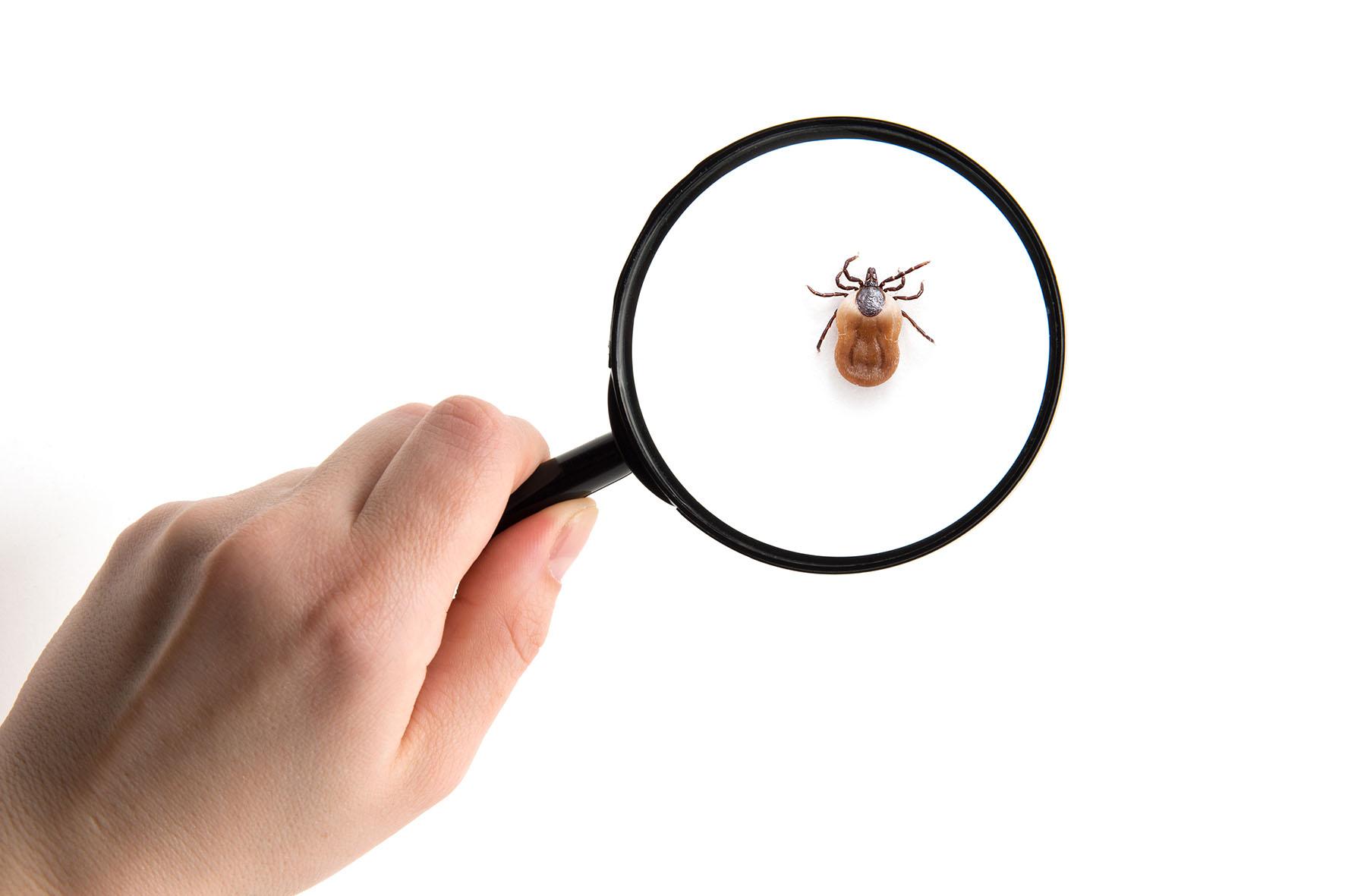 Disinfestazioni brescia eliminare gli insetti topi - Eliminare formiche in casa ...