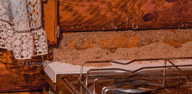Formiche nel muro trattamento marmo cucina - Formiche in cucina ...