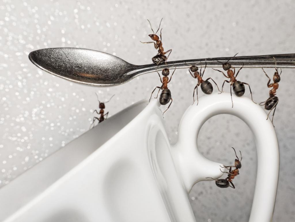 rimedi contro le formiche perch non muoiono