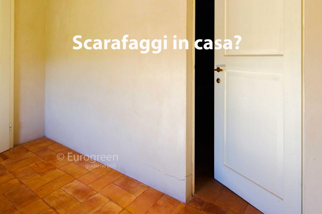 Eliminare gli scarafaggi in casa leggi le 7 risposte - Eliminare formiche in casa ...