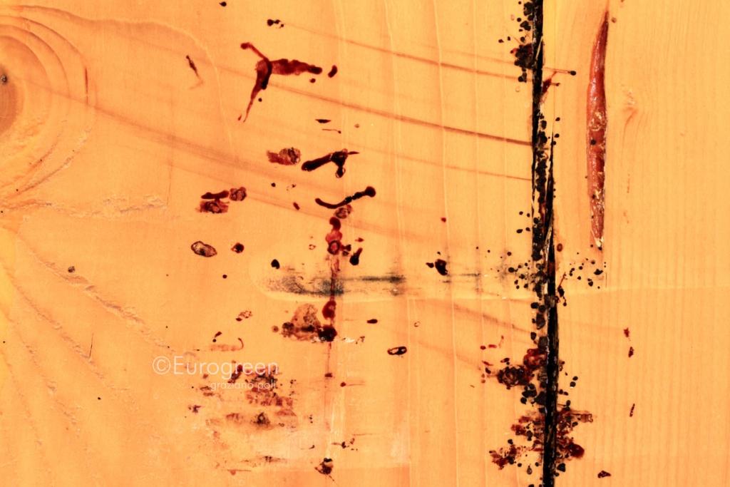 Cimice da letto archivi eurogreen - Immagini cimici da letto ...
