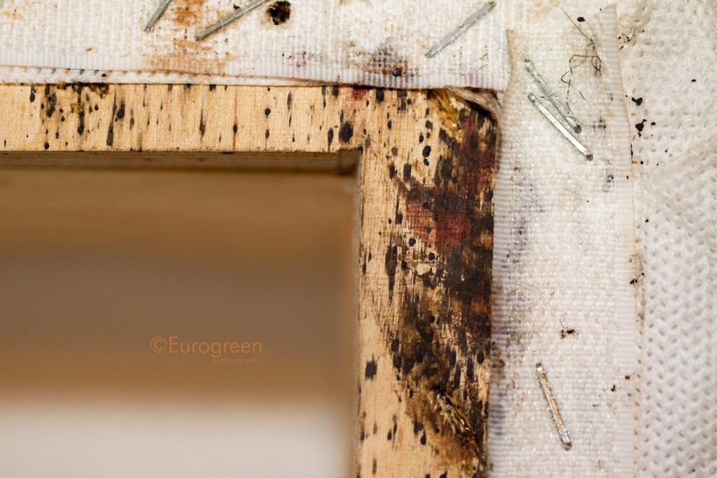 Insetti del letto archivi eurogreen - Uova cimici da letto ...