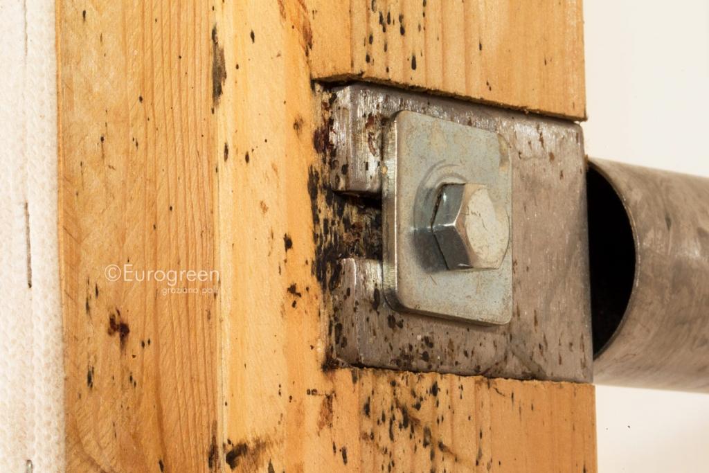 Cimice da letto archivi eurogreen - Eliminare le cimici da letto ...